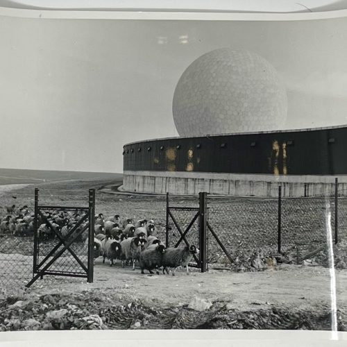 Dennis Wompra Studios Collection, Rough Fell Sheep come through the gate at RAF Fylingdales